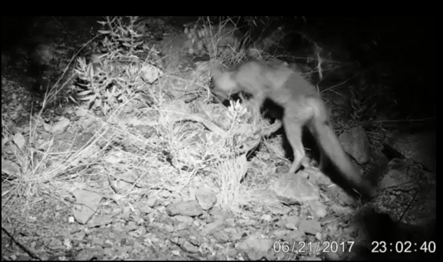 The Night Test Video Of Ltl Acorn Ltl-5210 series trail
